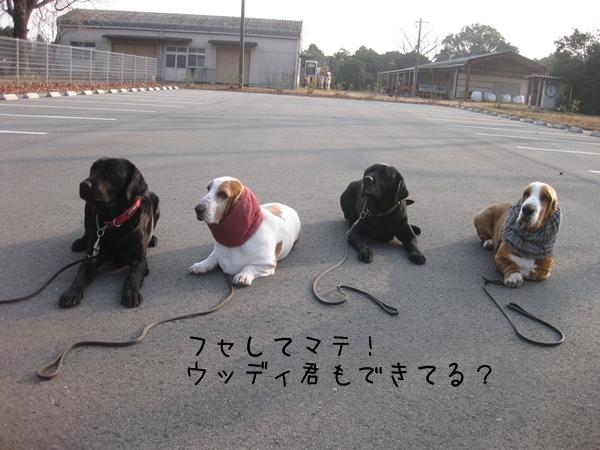 03_ふせてまて