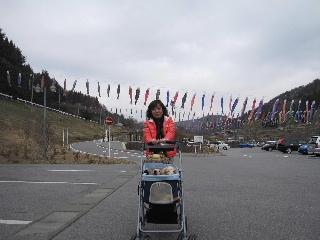 koinobari.jpg