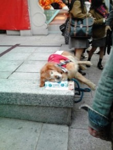 46時中4646日記-湊10 犬