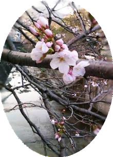 46時中4646日記-sakura