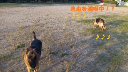 DSC_0034_convert_20110909201435.jpg