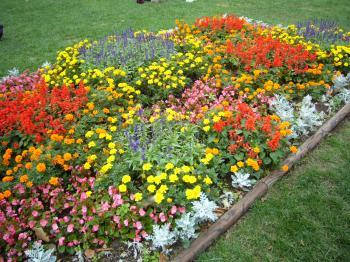 saf花壇