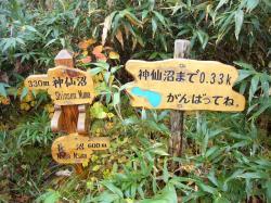 神仙沼あと3
