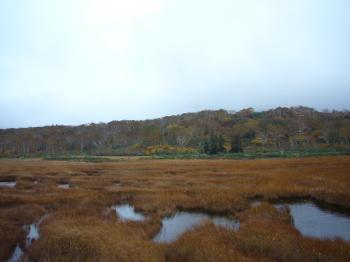 神仙沼湿原2