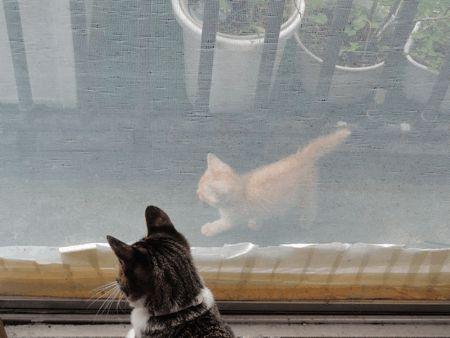 通りすがりの子猫3