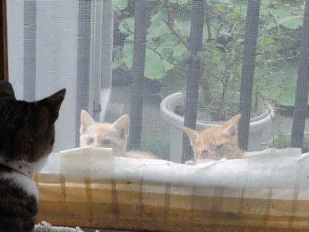 通りすがりの子猫2