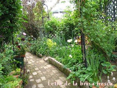 庭の様子 2011年5月初旬