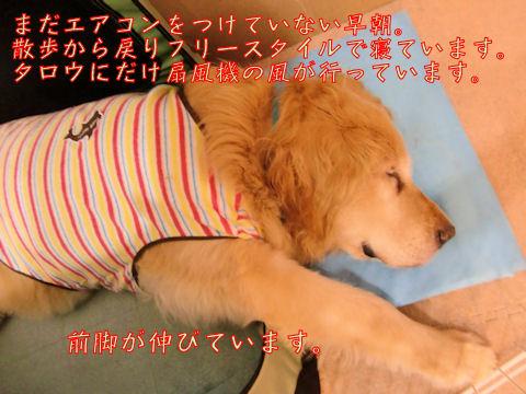 扇風機を独占する犬。