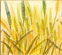 挿絵 麦の穂