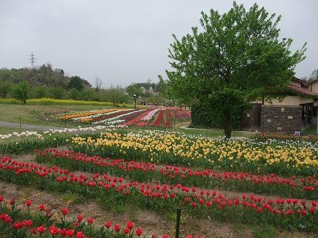 2011-05-03-17.jpg