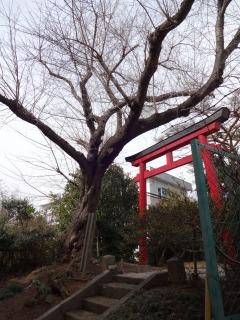 2014年03月15日 五社稲荷5