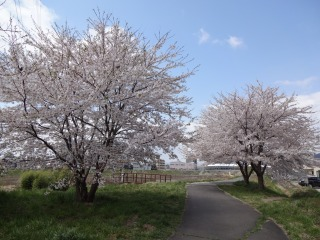 2014年04月19日 桜・泉区2