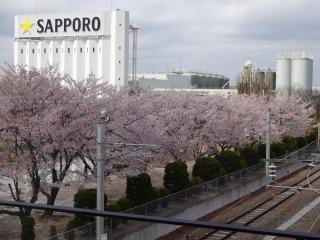 2014年04月19日 桜・名取市1
