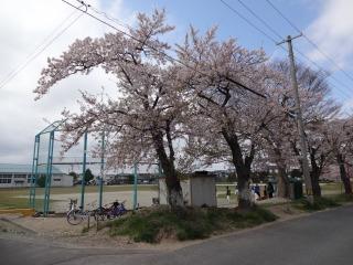 2014年04月19日 桜・名取市2