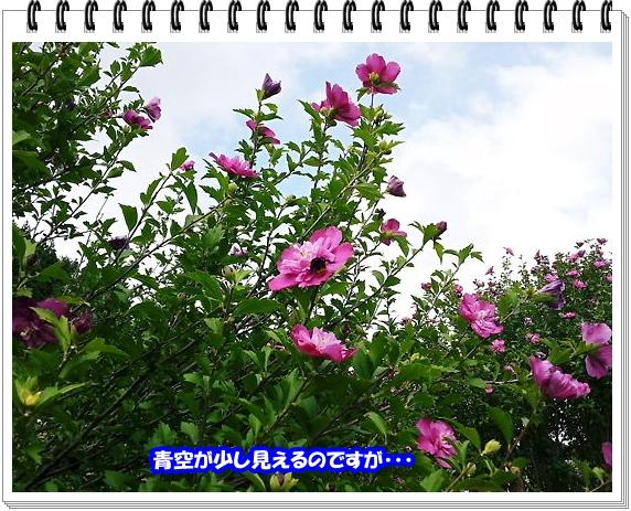1267ブログNo13
