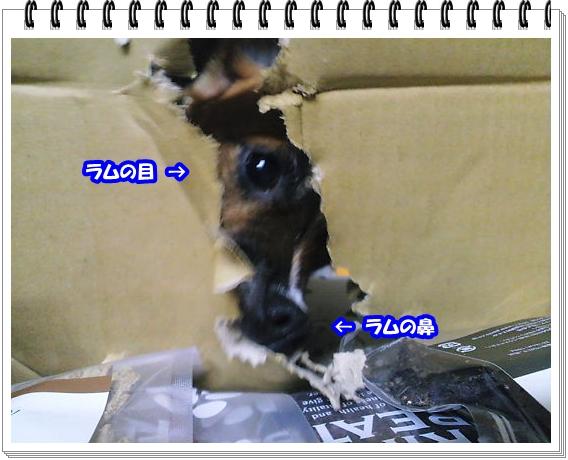 1368ブログNo4
