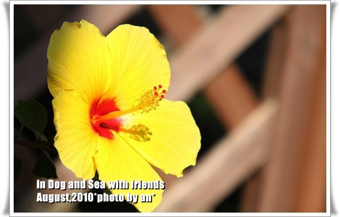 20100802_0209.jpg