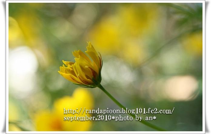 20100918_5376.jpg