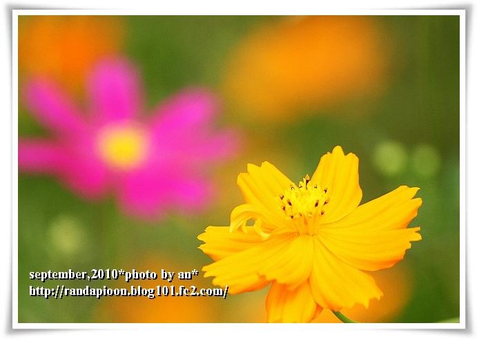 20100921_6684.jpg