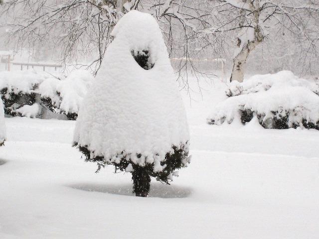 雪景色2 005
