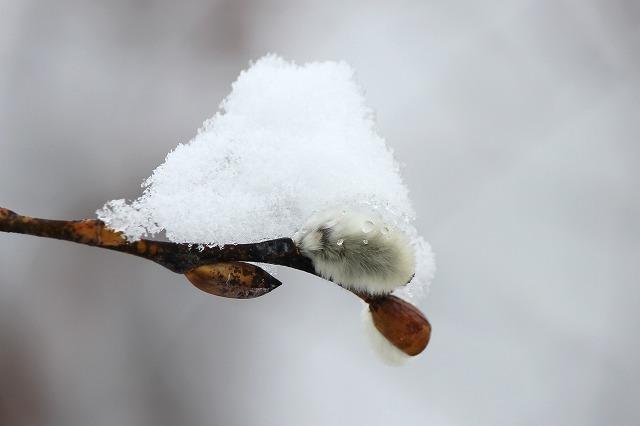 3月の雪 052