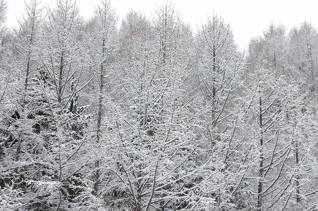 3月の雪 006