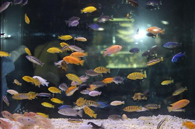 山の水族館 059