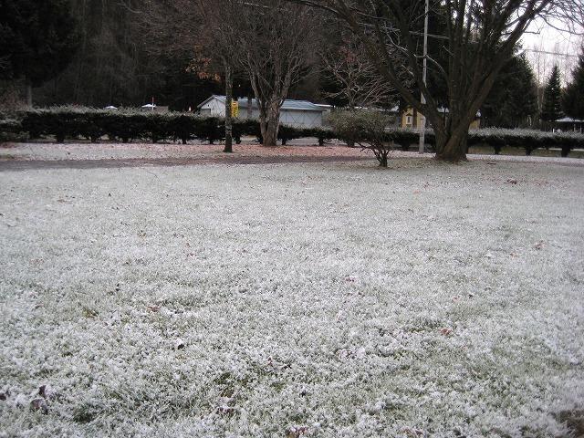 初雪 008
