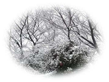 0109雪