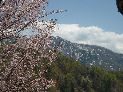 戸隠の山々と桜