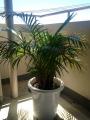 ぐんぐん育つ植木