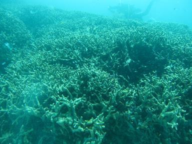 サンゴ畑~(≧▽≦)♪