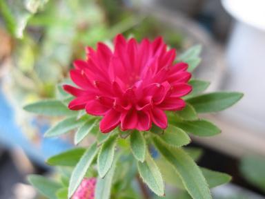 なんだっけな~、このお花。