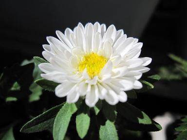白も可愛いです♪