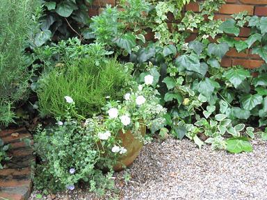 お庭はグリーンでいっぱい♪
