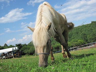 青い空に緑の大地に白い馬だ(≧▽≦)♪