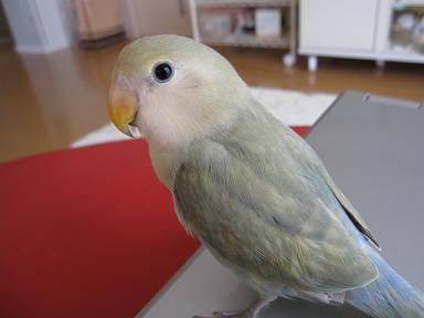 綺麗な羽色なの~(≧▽≦)♪