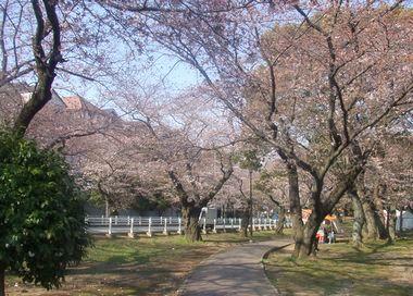 *桜並木*