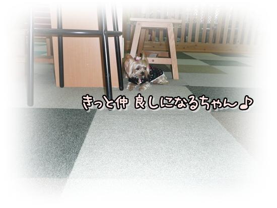 まりんちゃん3
