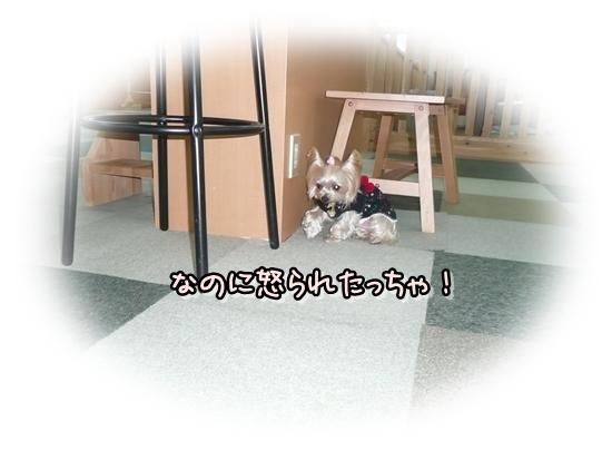 まりんちゃん2