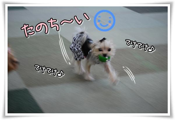 securedownloadCAWR8CO9_20101124073017.jpg