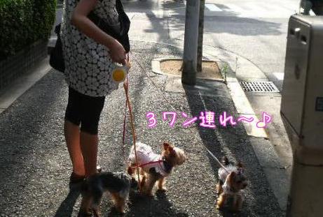 20110730堀江①