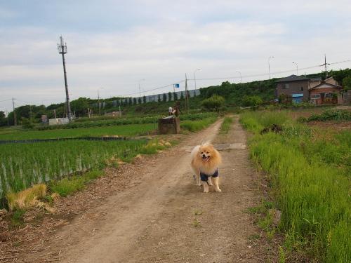 田んぼの中で