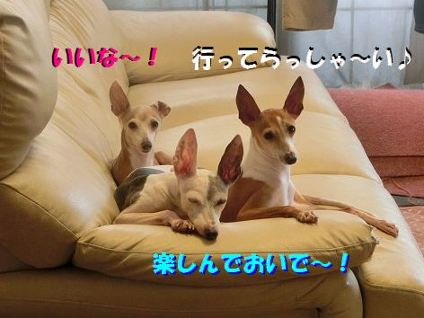 a_20141010222809a6c.jpg