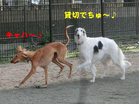 a_20141113011218fff.jpg