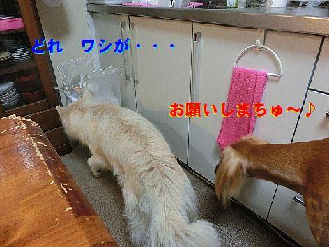 b_201410210115031bc.jpg