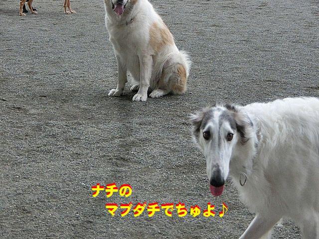 b_20141107223114fff.jpg