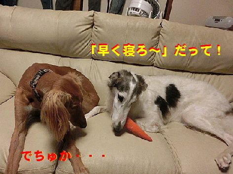 c_201411142343500c0.jpg