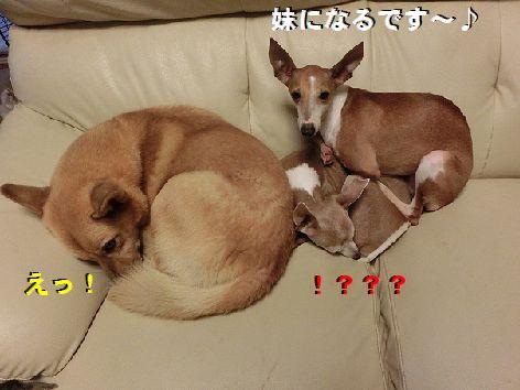 d_20141030232542cae.jpg