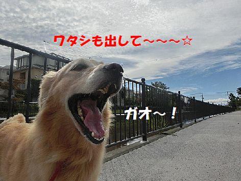 e_201410080734186c6.jpg